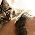 Kot atakuje ręce i nogi - co robić?