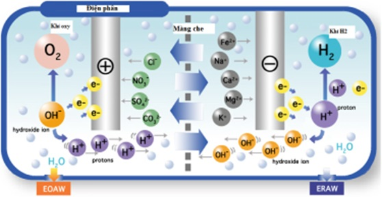 Máy lọc nước ion kiềm - Chia sẻ cho người mới tìm hiểu
