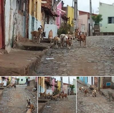 Resultado de imagem para cachorros soltos em acopiara
