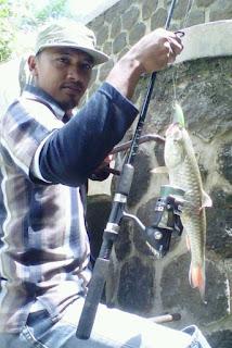 Ikan Target Casting di Air Tawar predator sungai rawa danau