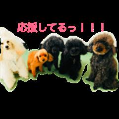 Poodle family enjoy