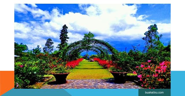 Wisata Kebun Mawar SituHapa, garut Jawa Barat