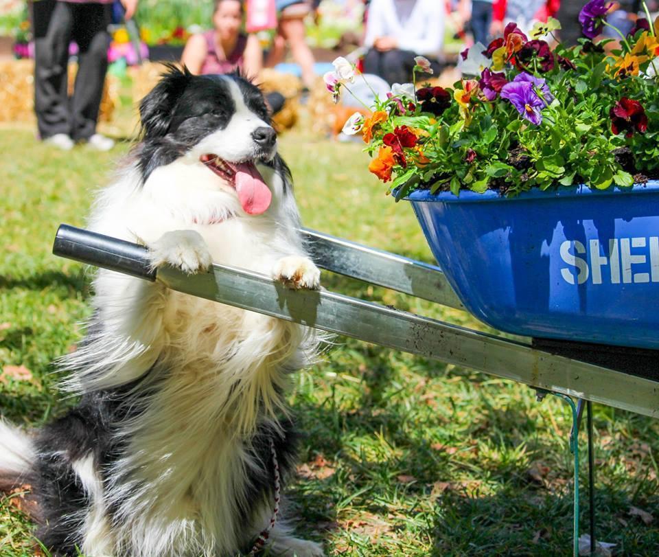 Dog Day Floriade