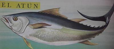 Dibujo de un atún
