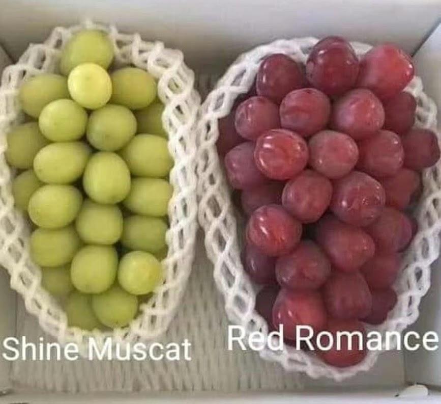 Bibit Anggur Import Red Romance Grafting Aceh