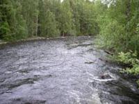 Особенности ловли при сильном течении