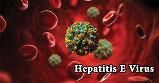 Hepatitis E virus (HEV) is a non-enveloped single stranded RNA virus