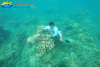 foto underwater karimunjawa