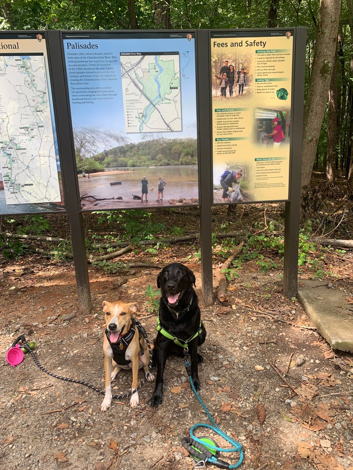 Albus and his cousin Sydney sit remarkably still in front of the trailhead sign for the East Palisades Indian trail, waiting for treats please.