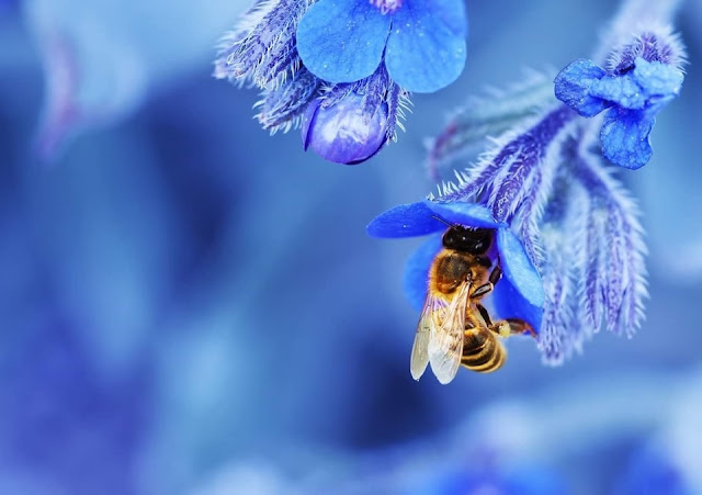 BELLEZAS DE ABEJAS EN IMAGENES - BEAUTY OF BEES IN IMAGES.