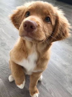 Image for ਪਾਲਤੂਆਂ ਲਈ ਇੰਸਟਾਗ੍ਰਾਮ ਕੈਪਸ਼ਨ  Instagram captions for Pets