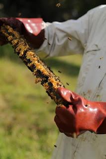 Пита с мед от медоносни пчели
