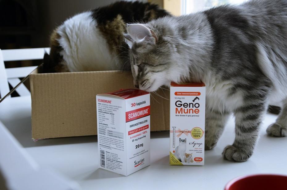 odporność u kotów