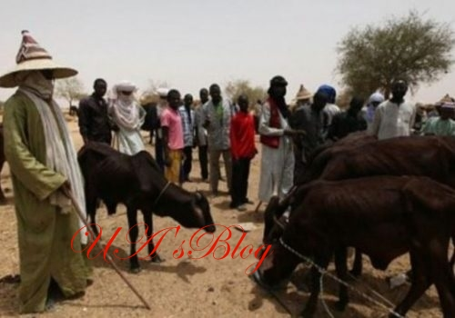 Fulani Herdsmen Give 11 Conditions For Peace In Nigeria