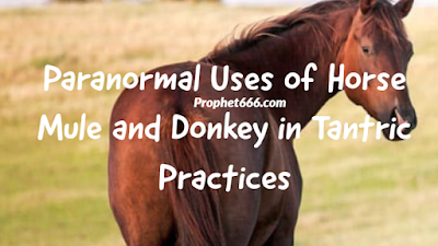 Paranormal Uses of Horse, Mule and Donkey in Tantra Shastra