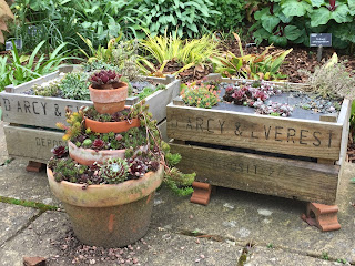 Flower pots of gradually decreasing size planete with alpines