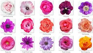 تحميل صور أزهار مختلفة الألوان بدقة عالية2