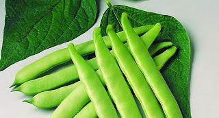 Beans herb