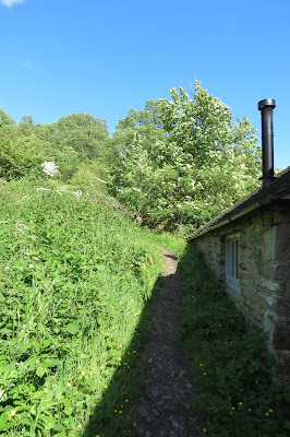 A narrow path between foliage on the left and the low, stone wall of the mill. Directly ahead, a tree in blossom.