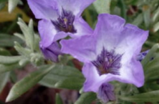 Investigadores arequipeños descubren nuevas especies vegetales endémicas