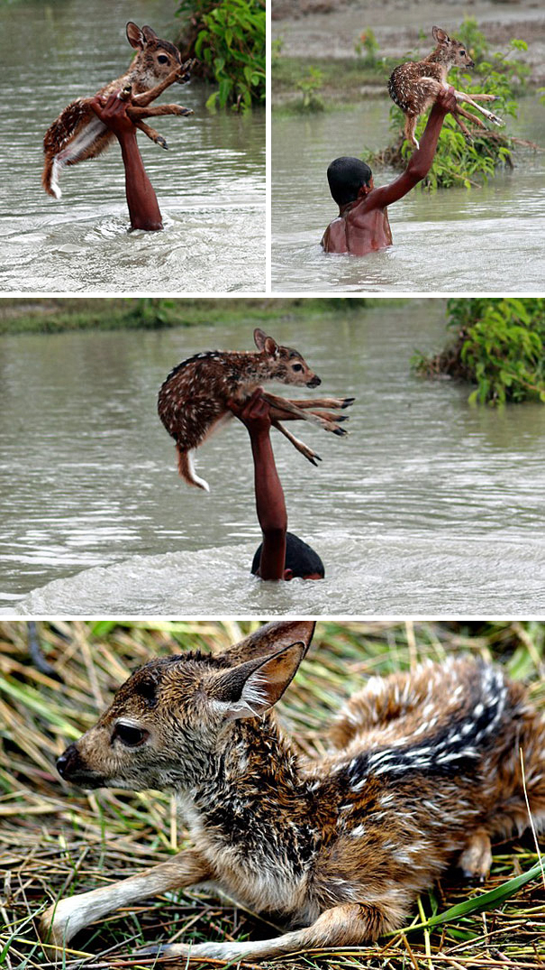 #2 Heroic Boy Risks His Life To Save A Drowning Baby Deer From Floodwaters In Bangladesh - 12 Kids Who'll Restore Your Faith In Humanity