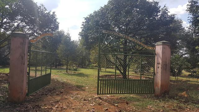 Cổng vườn nhà Nam
