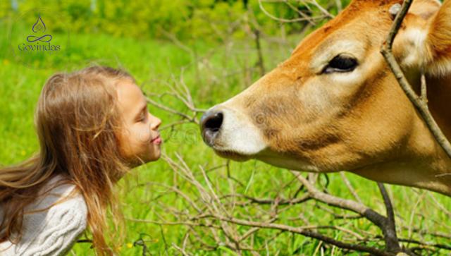 🤔¿Son los lácteos beneficiosos para nuestra salud?