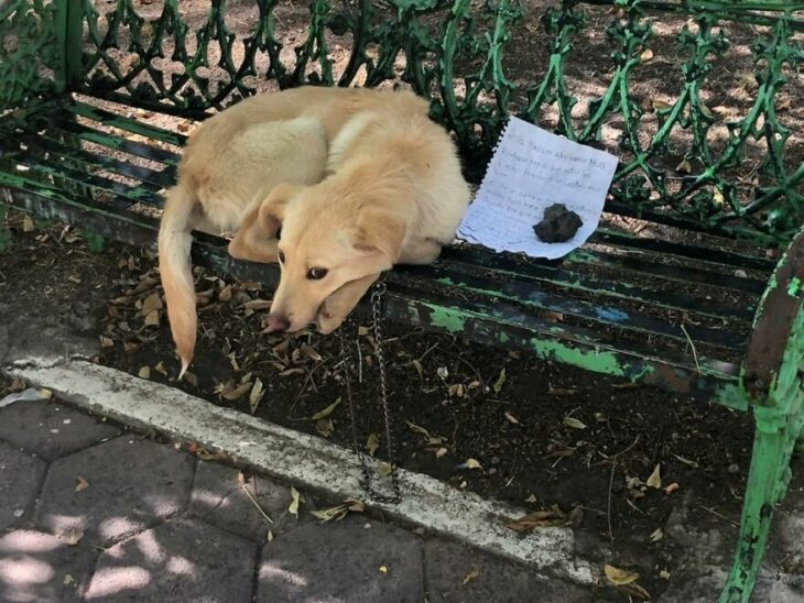 Niño deja a su perrito en un parque con una carta para que lo adopten porque lo maltrataban