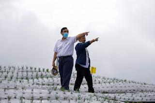 Menko Marves dan Mentan Tinjau Lahan Food Estate Humbahas: Ini Jadi Model untuk Pengembangan di Tempat Lain