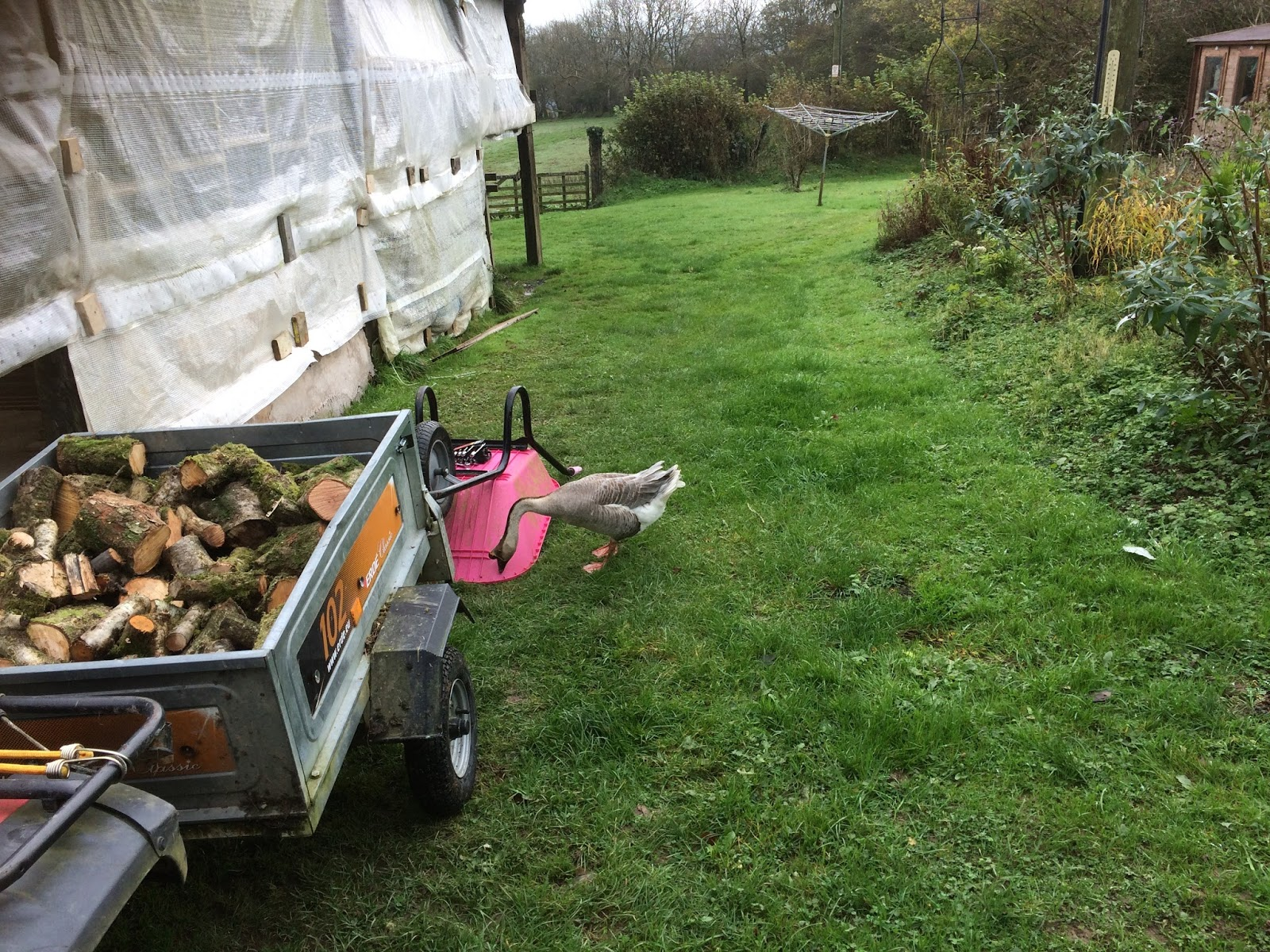 being self sufficient in wales goose obsesssion