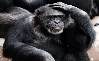 बंदर की जानकारी हिंदी में ▷ some facts about monkey in hindi