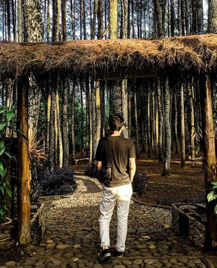 spot foto hutan pinus pengger bantul
