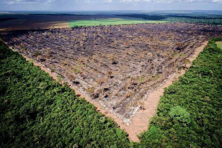 Molion um desmatamento total – impossível de ocorrer – não afetaria o clima globa