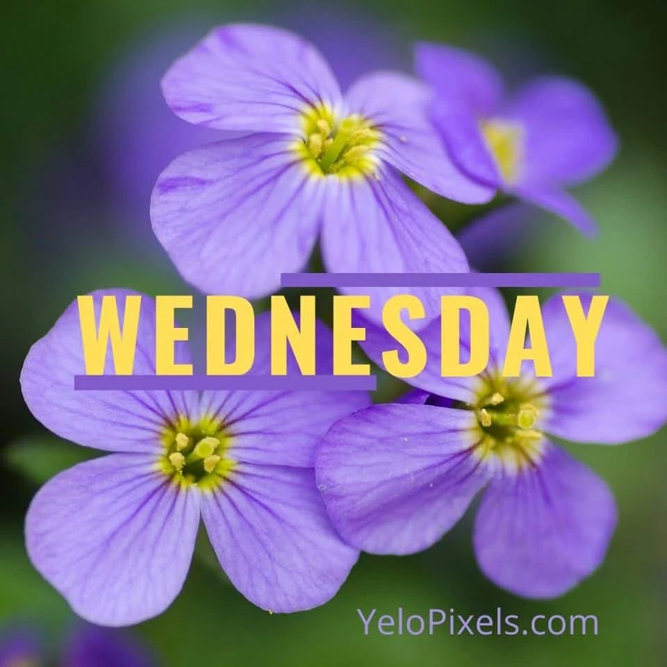 flower-at-wednesday-image