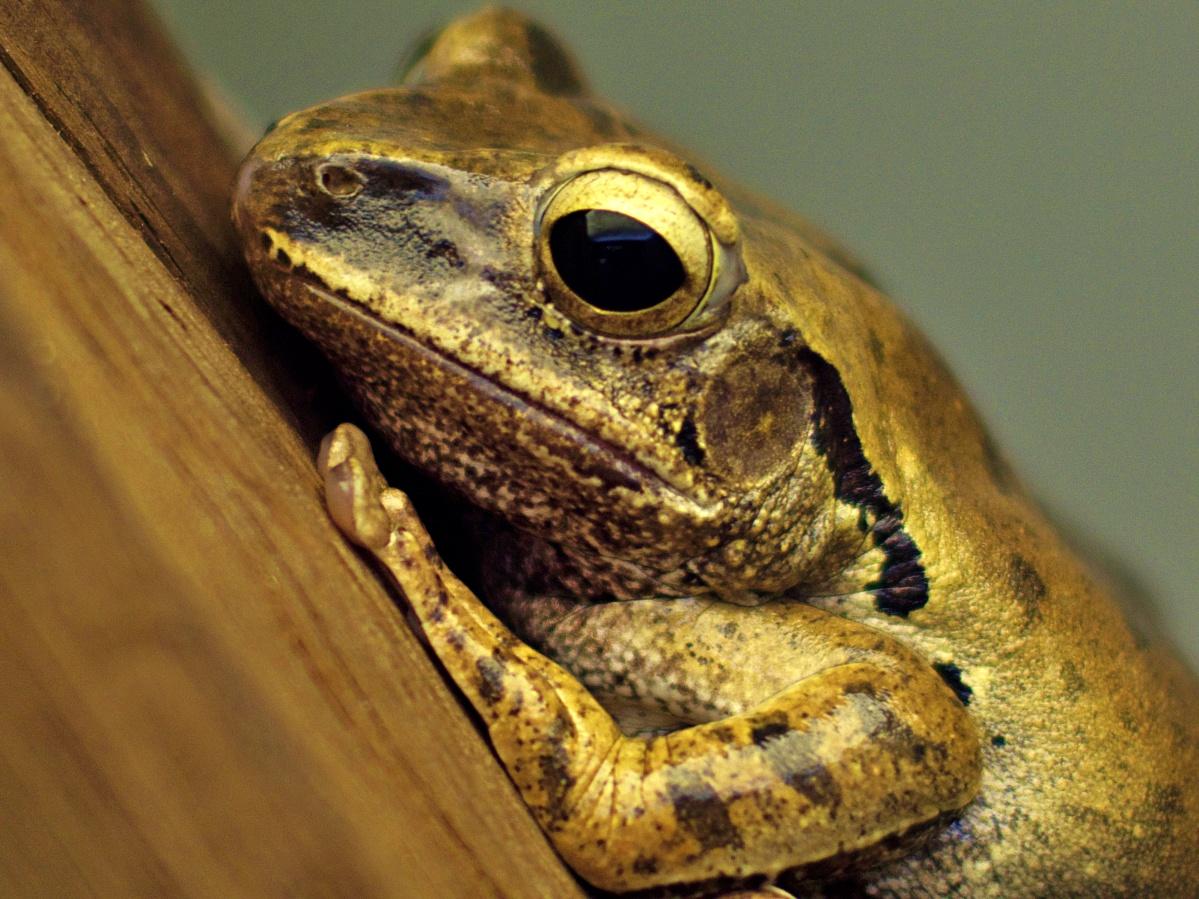 #006 Minolta Rokkor f1.4 50mm – Sei kein Frosch