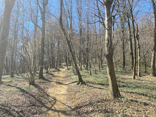 Woodland below Colle Roccolone, Bergamo.