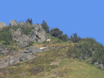 You could See a Mountain Goat Far in the Distance