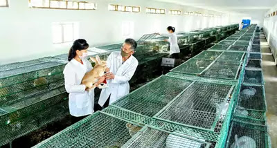 Thaechon Youth Breed Rabbit Farm