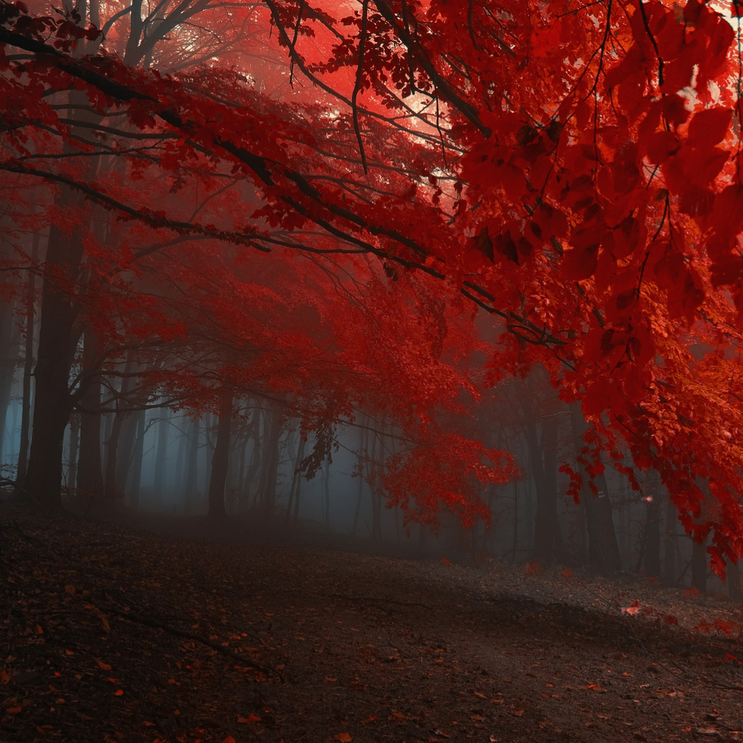 Autumn Dual Monitor Wallpaper Engine Free Download