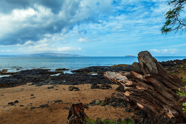 Maui Ocean with Old Tree