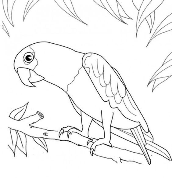 Tranh tô màu con Vẹt trong bui cây