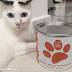 Parie Goat Milk for Kitten and Cats - Malaysia