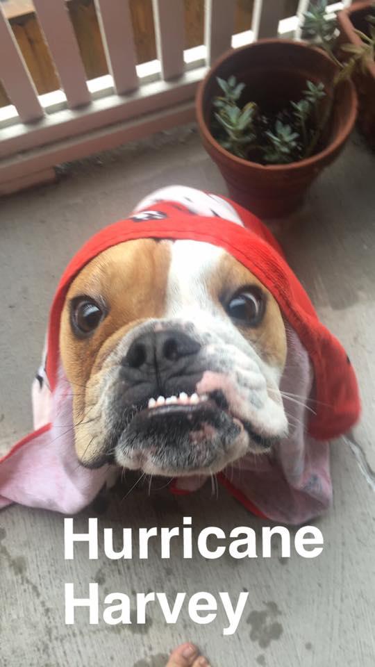 Hurricane Harvey Dog Rescue Reddit