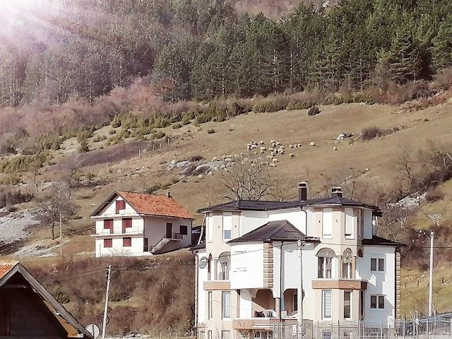Januarsko sunce: U Dosuđe ovce izašle na ispašu