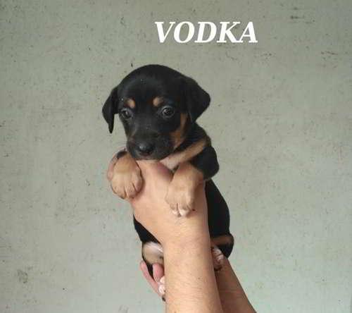 cachorros talla mediana 5