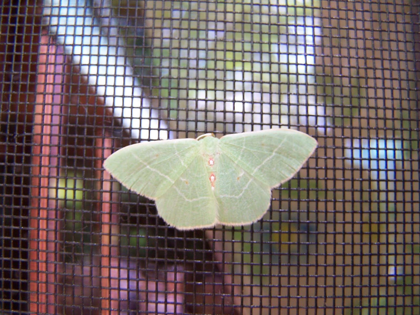 Small Moths In Bedroom Beatrice Euphemie Night Life