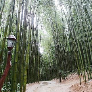 Indahnya Hutan Bambu Damyang Korea