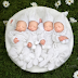 Check out these beautiful and adorable photos of newborn identical quadruplets