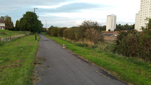 Tizer the Lhasa Apso: Walking in Sunderland