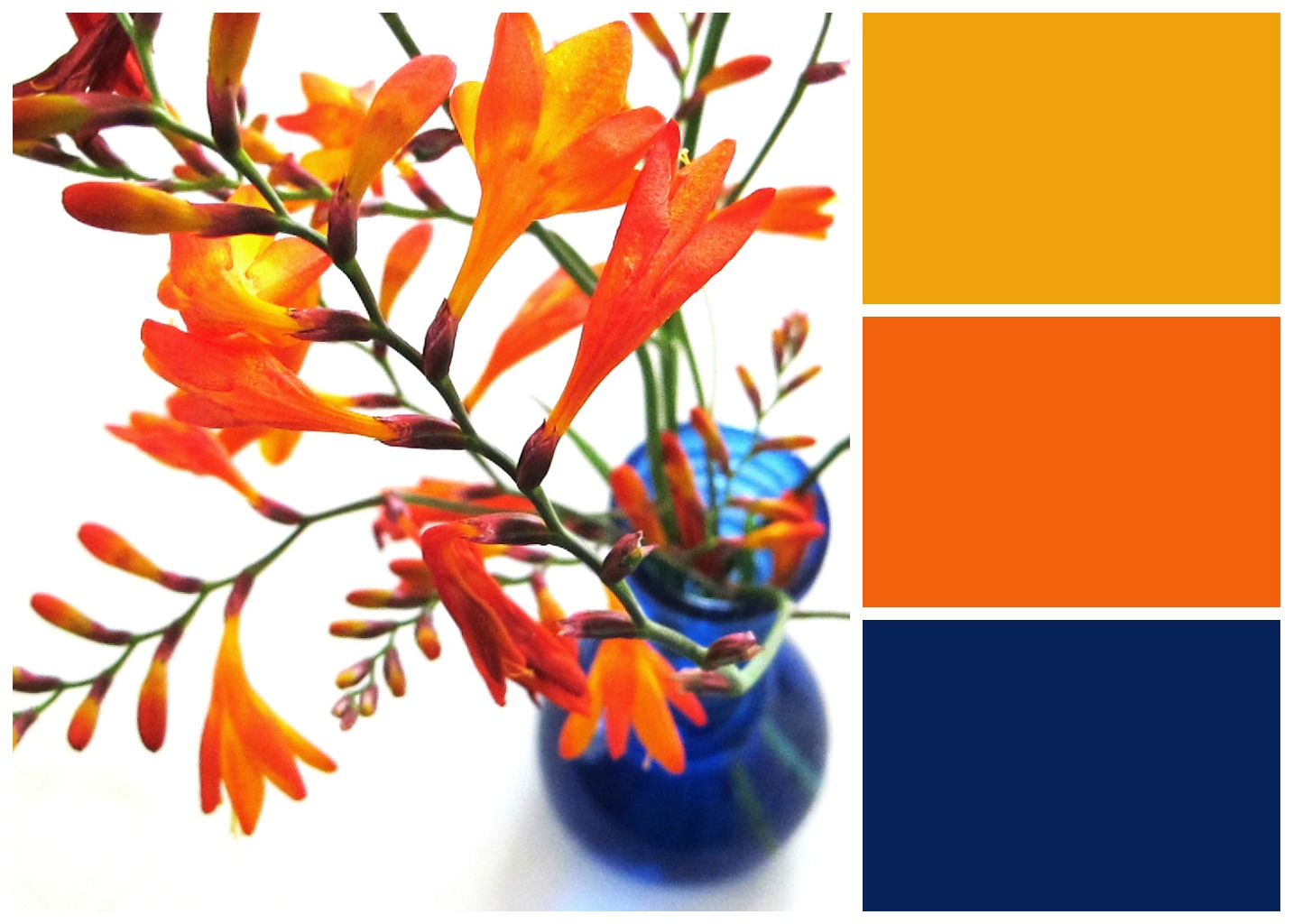 Velvet moth studio bright blue and orange - What colour goes with lilac ...